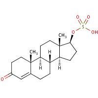 testosterone sulfate (CHEBI:84094)