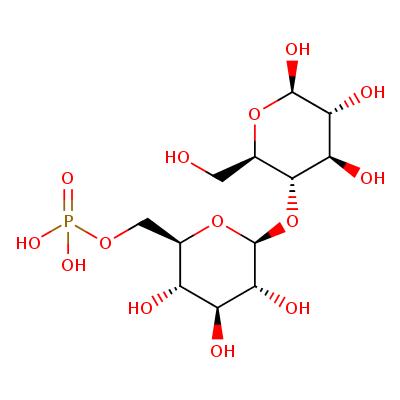 6-phospho-beta-D-glucosyl-(1->4)-beta-D-glucose (CHEBI:2233)