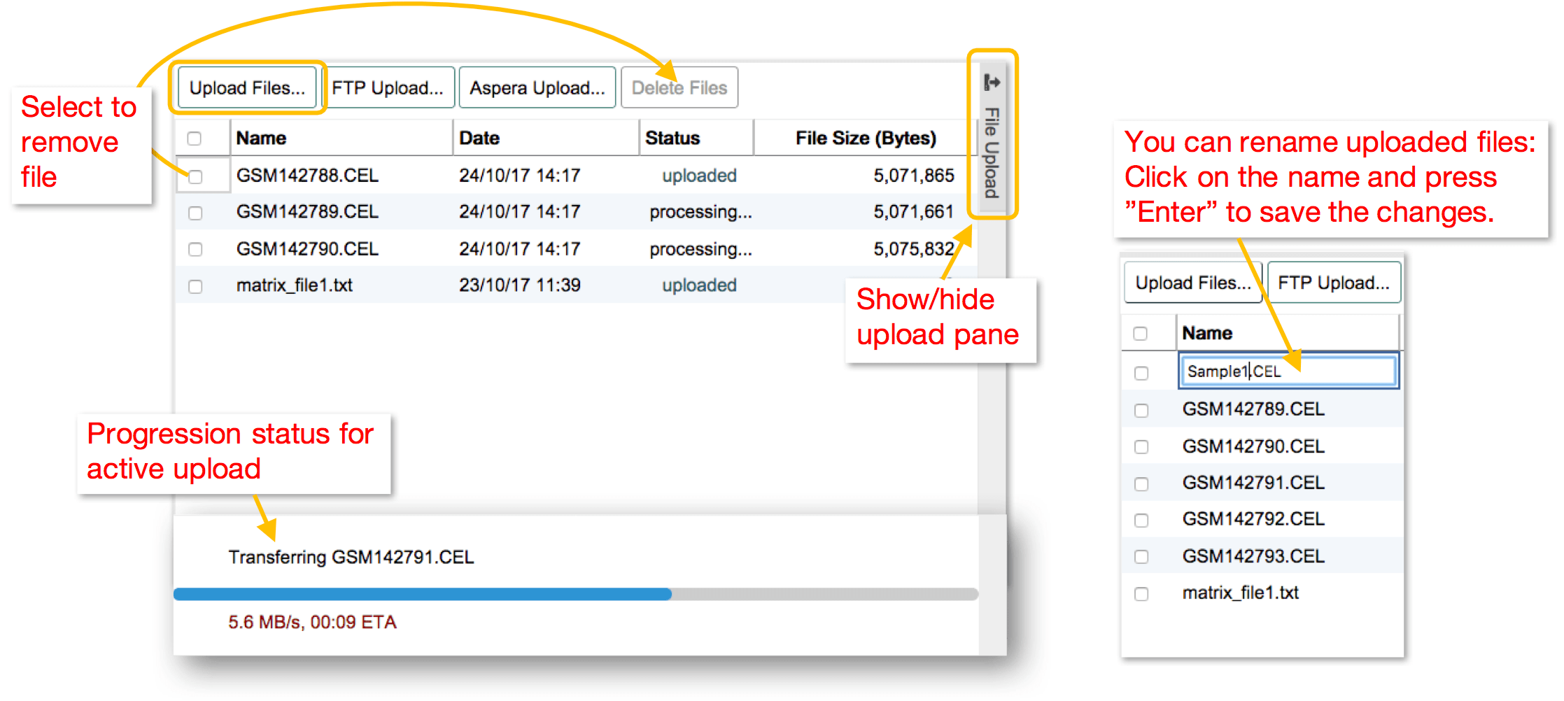 Upload Files and Assign to Samples < Guide < Annotare < EMBL-EBI