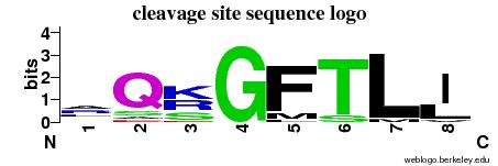 MEROPS - the Peptidase Database