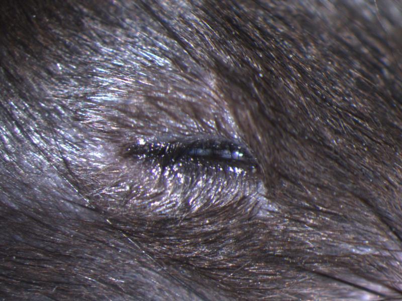 mp 0005287 narrow eye opening impc phenotype information