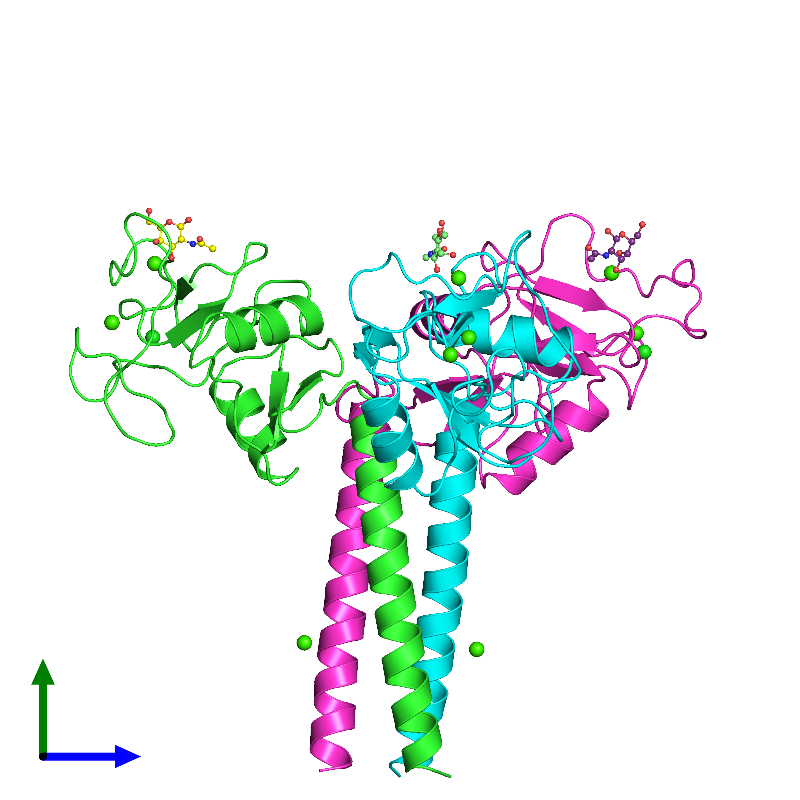 <div class='caption-body'><ul class ='image_legend_ul'>The deposited structure of PDB entry 1afb coloured by chain and viewed from the side. The entry contains: <li class ='image_legend_li'>3 copies of MANNOSE-BINDING PROTEIN-A</li><li class ='image_legend_li'>3 non-polymeric entities<ul class ='image_legend_ul'><li class ='image_legend_li'>3 copies of 2-acetamido-2-deoxy-beta-D-galactopyranose</li><li class ='image_legend_li'>9 copies of CALCIUM ION</li><li class ='image_legend_li'>2 copies of CHLORIDE ION</li></ul></li></div>