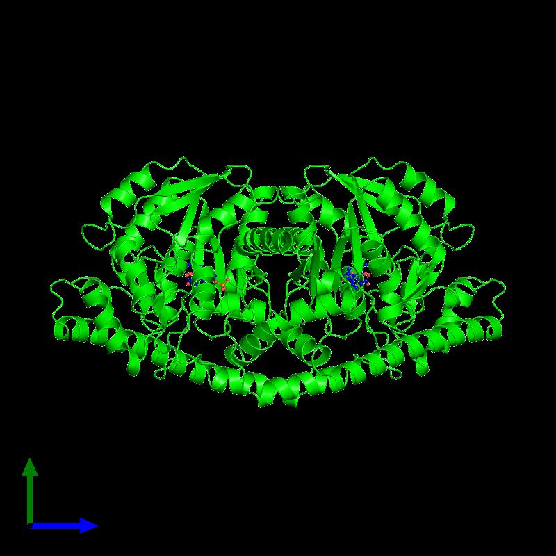 <div class='caption-body'><ul class ='image_legend_ul'> Dimeric assembly 1 of PDB entry 1akc coloured by chemically distinct molecules and viewed from the side. This assembly contains:<li class ='image_legend_li'>2 copies of Aspartate aminotransferase, mitochondrial</li><li class ='image_legend_li'>2 copies of 4-[(1,3-DICARBOXY-PROPYLAMINO)-METHYL]-3-HYDROXY-2-METHYL-5-PHOSPHONOOXYMETHYL-PYRIDINIUM</li></ul></div>