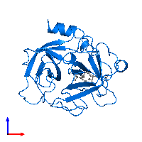 PDB 1au8 contains 1 copy of Cathepsin G in assembly 1. This protein is highlighted and viewed from the front.