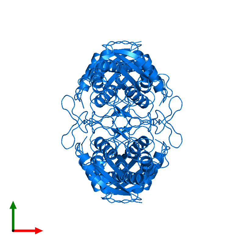 <div class='caption-body'>PDB entry 1aug contains 4 copies of PYROGLUTAMYL PEPTIDASE-1 in assembly 1. This protein is highlighted and viewed from the top.</div>