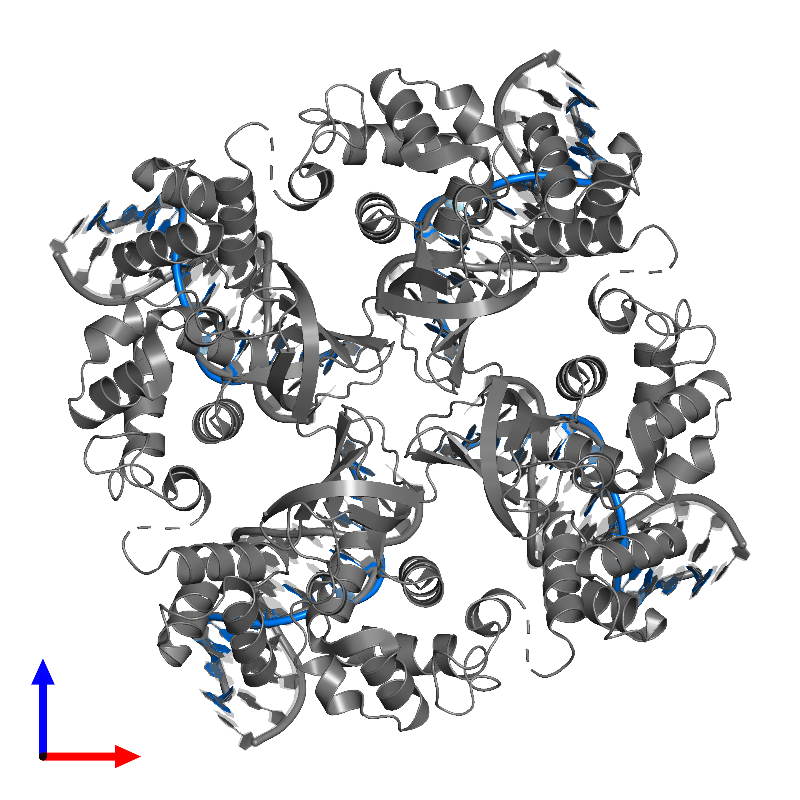 <div class='caption-body'>PDB entry 1c7y contains 4 copies of DNA (5'-D(P*DGP*DAP*DCP*DAP*DCP*DAP*DCP*DAP*DTP*DTP*DCP*DG)-3') in assembly 1. This DNA molecule is highlighted and viewed from the front.</div>