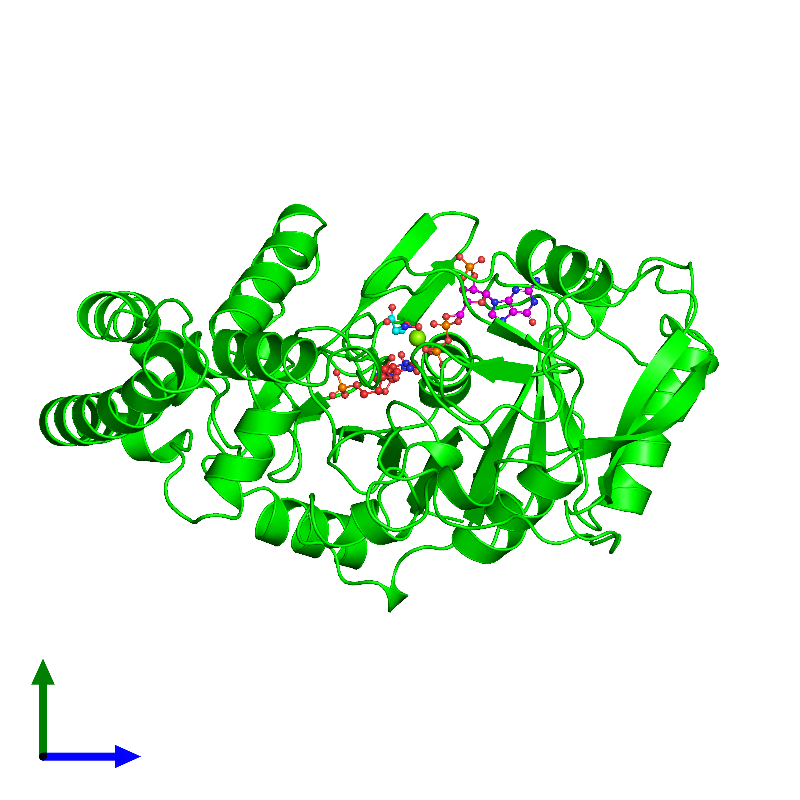 <div class='caption-body'><ul class ='image_legend_ul'> Monomeric assembly 1 of PDB entry 1ch8 coloured by chemically distinct molecules and viewed from the side. This assembly contains:<li class ='image_legend_li'>One copy of Adenylosuccinate synthetase</li><li class ='image_legend_li'>One copy of NITRATE ION</li><li class ='image_legend_li'>One copy of MAGNESIUM ION</li><li class ='image_legend_li'>One copy of GUANOSINE 5'-DIPHOSPHATE 2':3'-CYCLIC MONOPHOSPHATE</li><li class ='image_legend_li'>One copy of HADACIDIN</li><li class ='image_legend_li'>One copy of INOSINIC ACID</li></ul></div>