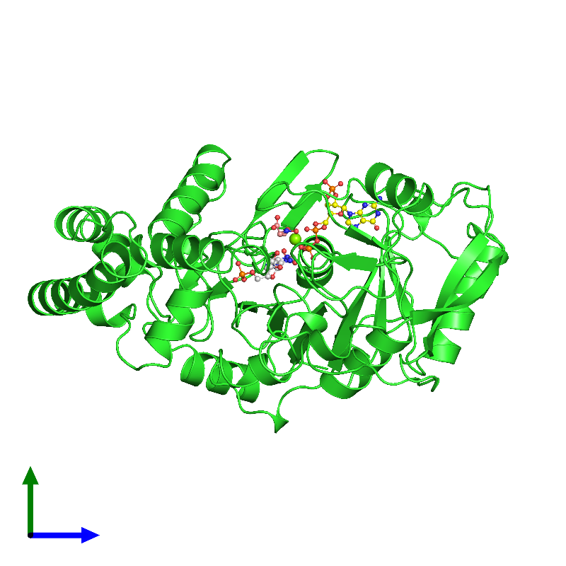 <div class='caption-body'><ul class ='image_legend_ul'>The deposited structure of PDB entry 1ch8 coloured by chain and viewed from the side. The entry contains: <li class ='image_legend_li'>1 copy of PROTEIN (ADENYLOSUCCINATE SYNTHETASE)</li><li class ='image_legend_li'>5 non-polymeric entities<ul class ='image_legend_ul'><li class ='image_legend_li'>1 copy of NITRATE ION</li><li class ='image_legend_li'>1 copy of MAGNESIUM ION</li><li class ='image_legend_li'>1 copy of GUANOSINE 5'-DIPHOSPHATE 2':3'-CYCLIC MONOPHOSPHATE</li><li class ='image_legend_li'>1 copy of HADACIDIN</li><li class ='image_legend_li'>1 copy of INOSINIC ACID</li></ul></li></div>
