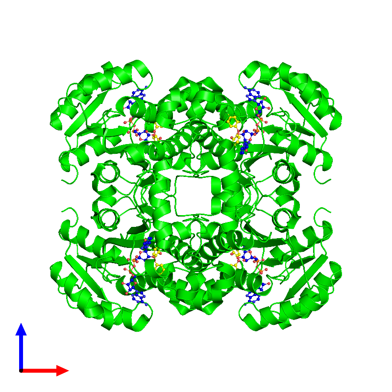 <div class='caption-body'><ul class ='image_legend_ul'> Tetrameric assembly 1 of PDB entry 1d8a coloured by chemically distinct molecules and viewed from the front. This assembly contains:<li class ='image_legend_li'>4 copies of ENOYL-[ACYL-CARRIER-PROTEIN] REDUCTASE</li><li class ='image_legend_li'>4 copies of NICOTINAMIDE-ADENINE-DINUCLEOTIDE</li><li class ='image_legend_li'>4 copies of TRICLOSAN</li></ul></div>