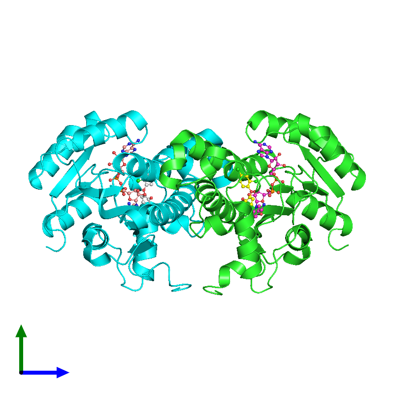 <div class='caption-body'><ul class ='image_legend_ul'>The deposited structure of PDB entry 1d8a coloured by chain and viewed from the side. The entry contains: <li class ='image_legend_li'>2 copies of ENOYL-[ACYL-CARRIER-PROTEIN] REDUCTASE</li><li class ='image_legend_li'>2 non-polymeric entities<ul class ='image_legend_ul'><li class ='image_legend_li'>2 copies of NICOTINAMIDE-ADENINE-DINUCLEOTIDE</li><li class ='image_legend_li'>2 copies of TRICLOSAN</li></ul></li></div>
