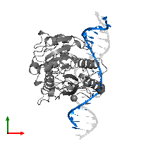 PDB 1dct contains 1 copy of DNA (5'-D(*TP*CP*AP*CP*TP*GP*GP*TP*GP*GP*(C5M)P*CP*TP*GP*CP*TP*GP*G)-3') in assembly 1. This DNA molecule is highlighted and viewed from the top.