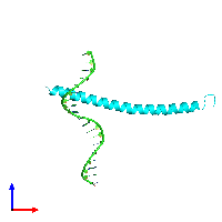 PDB 1dgc coloured by chain and viewed from the front.