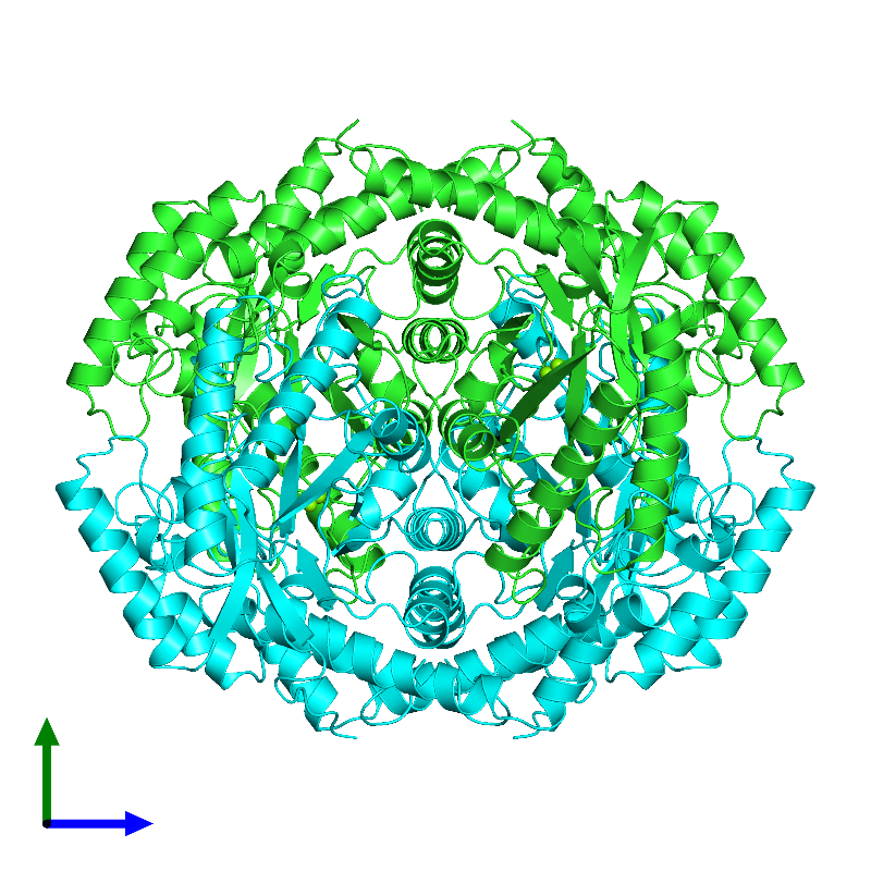<div class='caption-body'><ul class ='image_legend_ul'> Tetrameric assembly 1 of PDB entry 1dxi coloured by chain and viewed from the side. This assembly contains:<li class ='image_legend_li'>4 copies of D-XYLOSE ISOMERASE</li><li class ='image_legend_li'>8 copies of MAGNESIUM ION</li></ul></div>