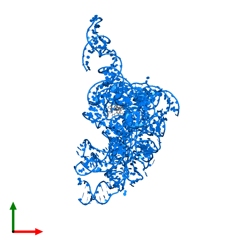 <div class='caption-body'>PDB entry 1ffz contains 1 copy of 23S ribosomal RNA in assembly 1. This RNA molecule is highlighted and viewed from the top.</div>