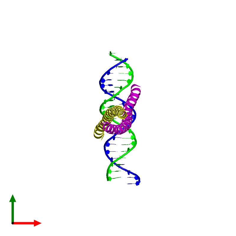 <div class='caption-body'><ul class ='image_legend_ul'> Tetrameric assembly 1 of PDB entry 1fos coloured by chemically distinct molecules and viewed from the top. This assembly contains:<li class ='image_legend_li'>One copy of DNA (5'-D(*AP*AP*TP*GP*GP*AP*TP*GP*AP*GP*TP*CP*AP*TP*AP*GP*GP*AP*GP*A)-3')</li><li class ='image_legend_li'>One copy of DNA (5'-D(*TP*TP*CP*TP*CP*CP*TP*AP*TP*GP*AP*CP*TP*CP*AP*TP*CP*CP*AP*T)-3')</li><li class ='image_legend_li'>One copy of P55-C-FOS PROTO-ONCOGENE PROTEIN</li><li class ='image_legend_li'>One copy of C-JUN PROTO-ONCOGENE PROTEIN</li></ul></div>