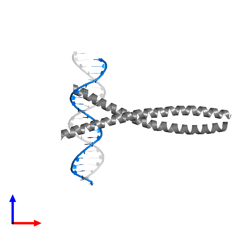 <div class='caption-body'>PDB entry 1fos contains 1 copy of DNA (5'-D(*TP*TP*CP*TP*CP*CP*TP*AP*TP*GP*AP*CP*TP*CP*AP*TP*CP*CP*AP*T)-3') in assembly 1. This DNA molecule is highlighted and viewed from the front.</div>