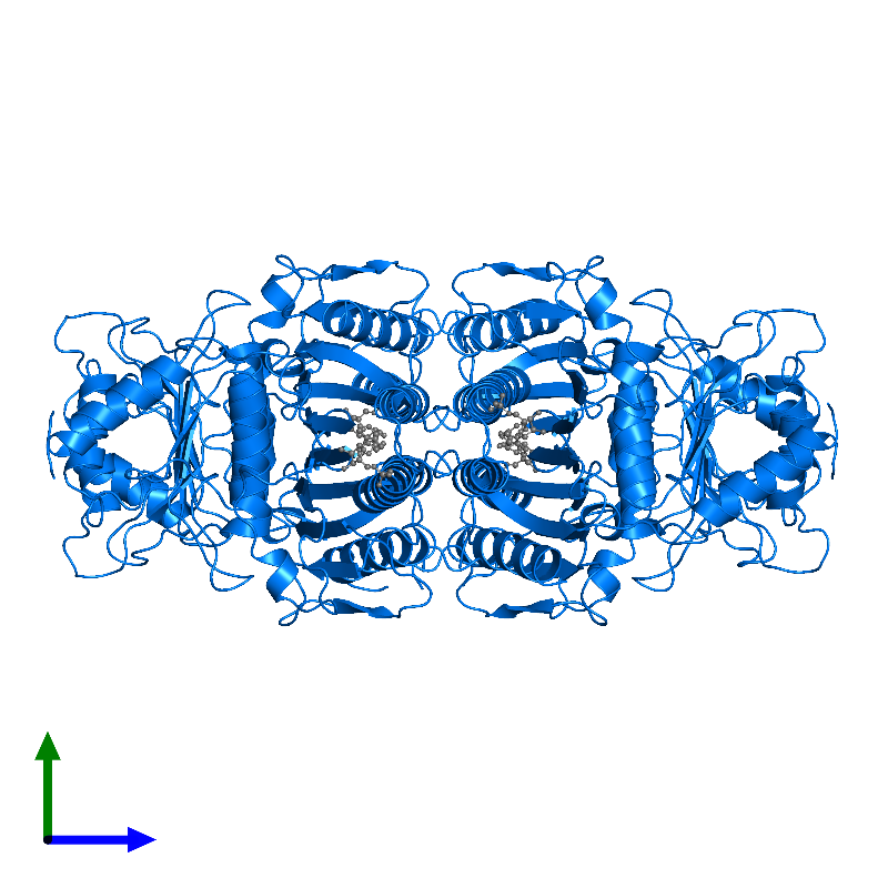 <div class='caption-body'>PDB entry 1fta contains 4 copies of Fructose-1,6-bisphosphatase 1 in assembly 1. This protein is highlighted and viewed from the side.</div>