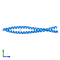 PDB 1gk4 contains 2 copies of Vimentin in assembly 1. This protein is highlighted and viewed from the side.