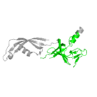 1 copy of CATH domain 2.40.50.140 (OB fold (Dihydrolipoamide Acetyltransferase, E2P)) in DNA-directed RNA polymerase subunit Rpo7 in PDB 1go3.