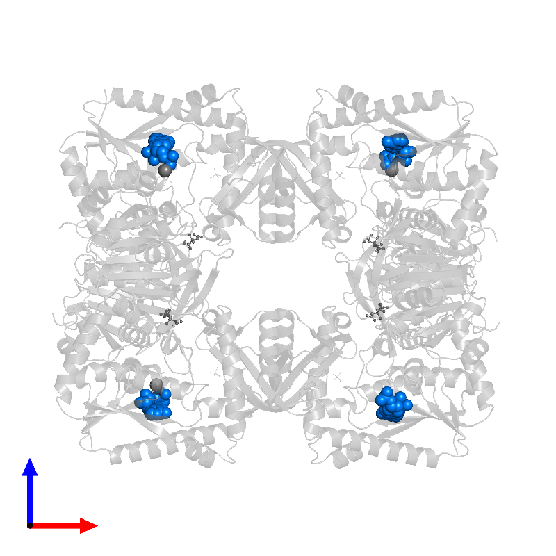 <div class='caption-body'>PDB entry 1gpm contains 4 copies of ADENOSINE MONOPHOSPHATE in assembly 1. This small molecule is highlighted and viewed from the front.</div>