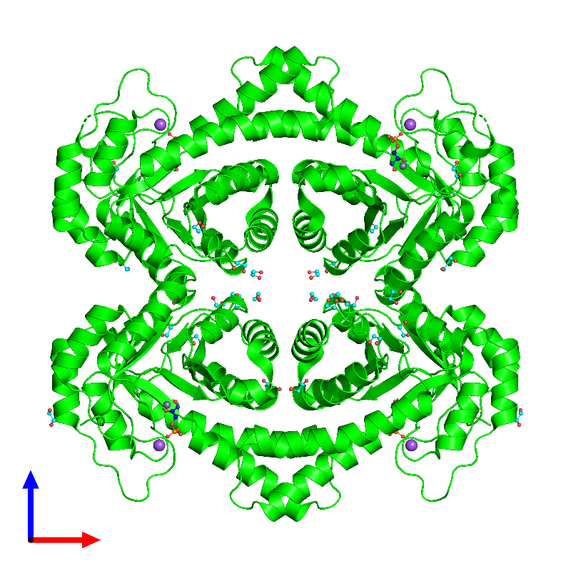 <div class='caption-body'><ul class ='image_legend_ul'> Tetrameric assembly 1 of PDB entry 1gvf coloured by chemically distinct molecules and viewed from the front. This assembly contains:<li class ='image_legend_li'>4 copies of TAGATOSE-BISPHOSPHATE ALDOLASE AGAY</li><li class ='image_legend_li'>4 copies of PHOSPHOGLYCOLOHYDROXAMIC ACID</li><li class ='image_legend_li'>4 copies of ZINC ION</li><li class ='image_legend_li'>4 copies of SODIUM ION</li><li class ='image_legend_li'>28 copies of 1,2-ETHANEDIOL</li></ul></div>