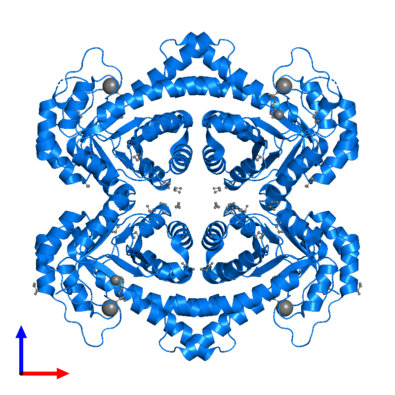 <div class='caption-body'>PDB entry 1gvf contains 4 copies of TAGATOSE-BISPHOSPHATE ALDOLASE AGAY in assembly 1. This protein is highlighted and viewed from the front.</div>