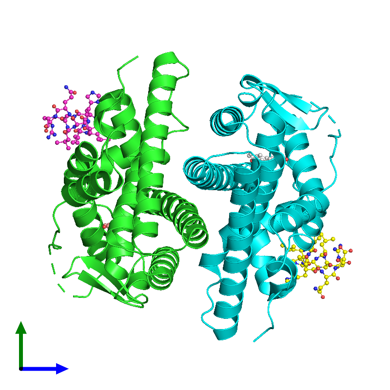 <div class='caption-body'><ul class ='image_legend_ul'>The deposited structure of PDB entry 1gwq coloured by chain and viewed from the side. The entry contains: <li class ='image_legend_li'>2 copies of Estrogen receptor</li><li class ='image_legend_li'>2 copies of Nuclear receptor coactivator 2</li><li class ='image_legend_li'>There is 1 non-polymeric molecule<ul class ='image_legend_ul'><li class ='image_legend_li'>2 copies of RALOXIFENE CORE</li></ul></li></div>
