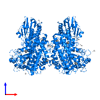 PDB 1h41 contains 2 copies of Extracellular xylan exo-alpha-(1->2)-glucuronosidase in assembly 1. This protein is highlighted and viewed from the front.
