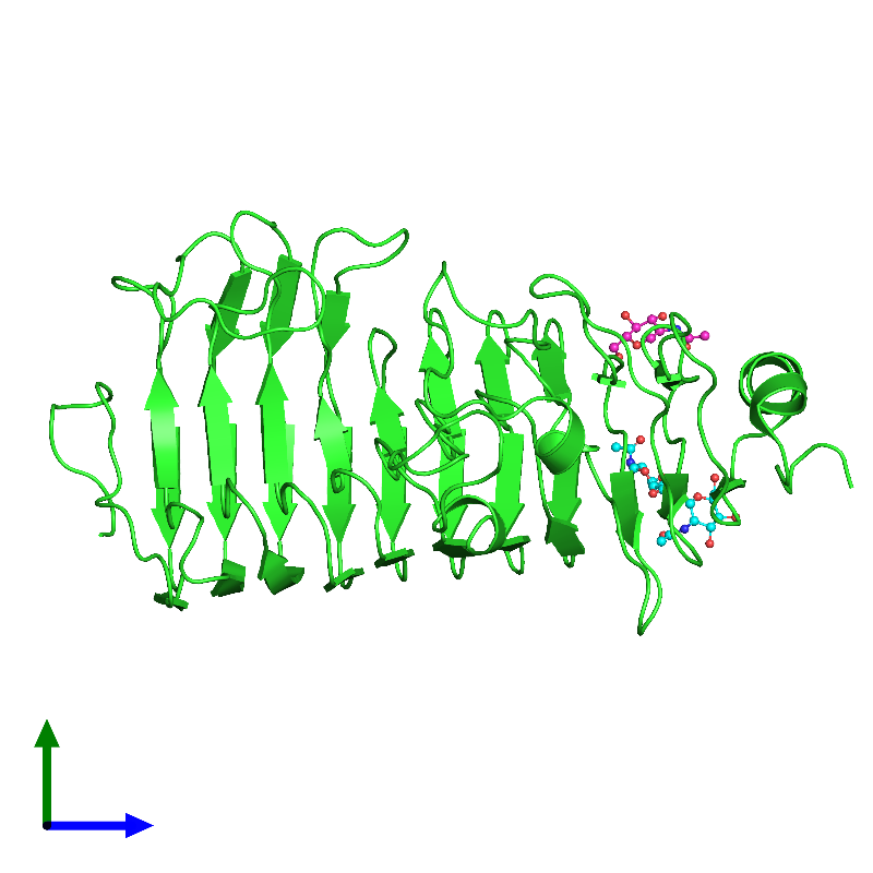 <div class='caption-body'><ul class ='image_legend_ul'>The deposited structure of PDB entry 1hg8 coloured by chain and viewed from the side. The entry contains: <li class ='image_legend_li'>1 copy of Polygalacturonase</li><li class ='image_legend_li'>There is 1 non-polymeric molecule<ul class ='image_legend_ul'><li class ='image_legend_li'>1 copy of 2-acetamido-2-deoxy-beta-D-glucopyranose</li></ul></li></div>