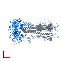 PDB 1hgh contains 3 copies of Hemagglutinin HA1 chain in assembly 1. This protein is highlighted and viewed from the front.