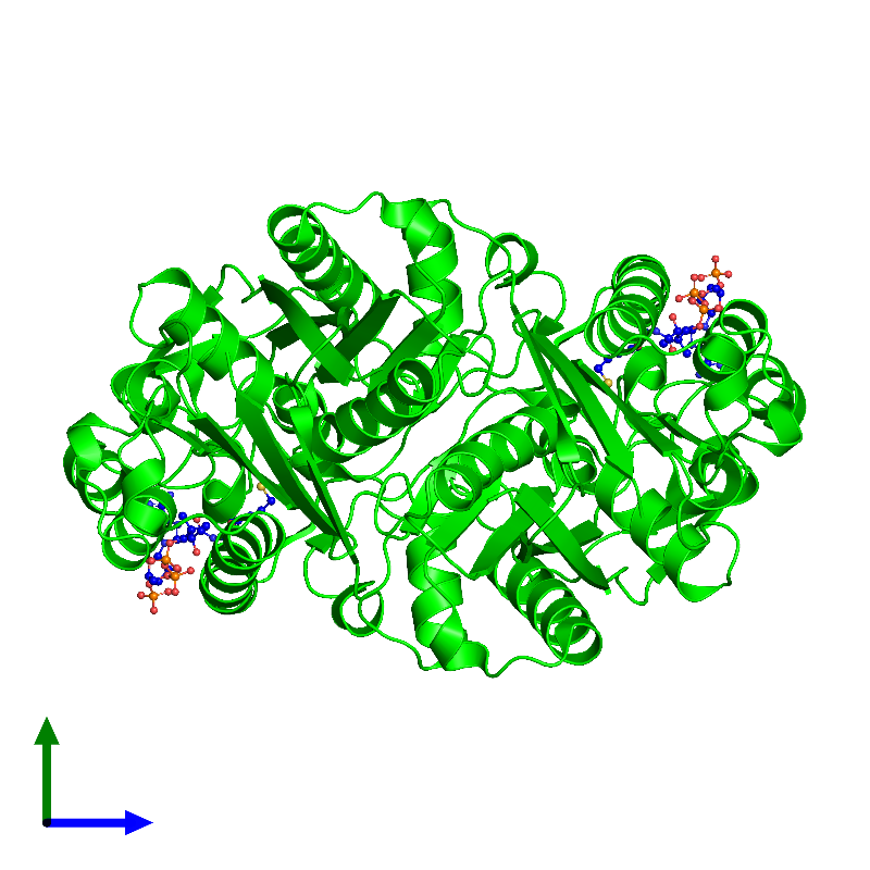 <div class='caption-body'><ul class ='image_legend_ul'> Dimeric assembly 1 of PDB entry 1hnd coloured by chemically distinct molecules and viewed from the side. This assembly contains:<li class ='image_legend_li'>2 copies of BETA-KETOACYL-ACYL CARRIER PROTEIN SYNTHASE III</li><li class ='image_legend_li'>2 copies of COENZYME A</li></ul></div>