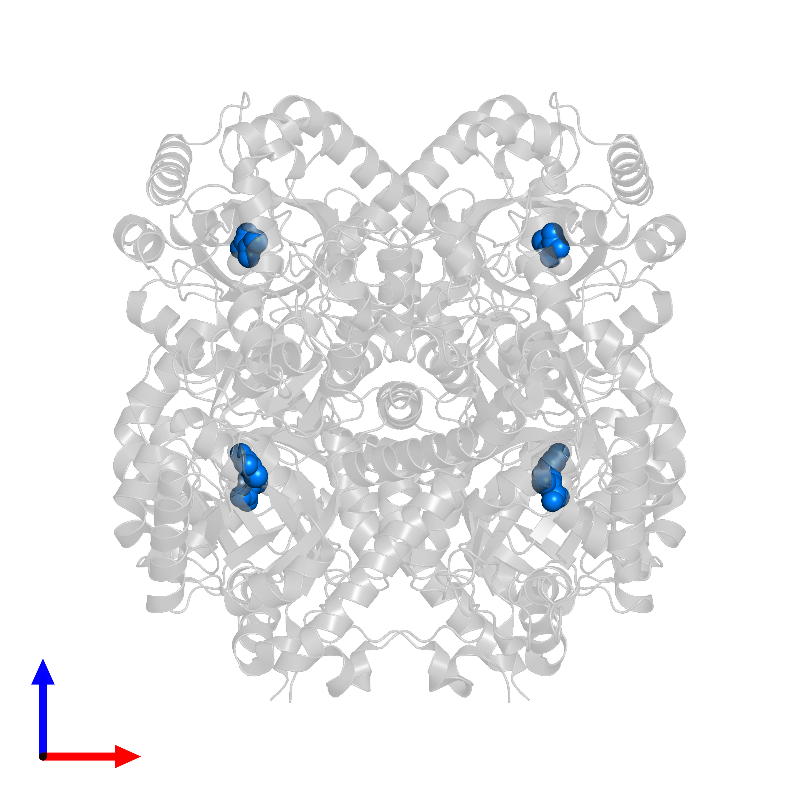 <div class='caption-body'>PDB entry 1izc contains 6 copies of PYRUVIC ACID in assembly 1. This small molecule is highlighted and viewed from the front.</div>