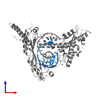PDB 1jfi contains 1 copy of 5'-D(*TP*TP*GP*GP*CP*TP*AP*TP*AP*AP*AP*AP*GP*GP*GP*CP*TP*CP*C)-3' in assembly 1. This DNA molecule is highlighted and viewed from the front.