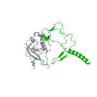 1 copy of Pfam domain PF03967 (Photosynthetic reaction centre, H-chain N-terminal region) in Reaction center protein H chain in PDB 1k6n.
