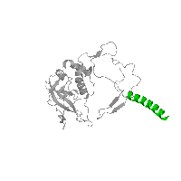 1 copy of SCOP domain 81489 (Photosystem II reaction centre subunit H, transmembrane region) in Reaction center protein H chain in PDB 1k6n.