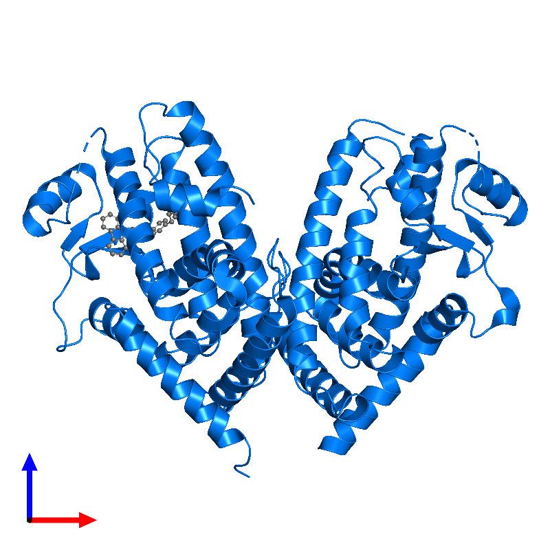 <div class='caption-body'>PDB entry 1knu contains 2 copies of Peroxisome proliferator-activated receptor gamma in assembly 1. This protein is highlighted and viewed from the front.</div>