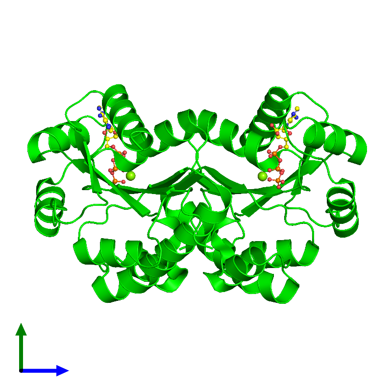 <div class='caption-body'><ul class ='image_legend_ul'> Dimeric assembly 1 of PDB entry 1ko5 coloured by chemically distinct molecules and viewed from the side. This assembly contains:<li class ='image_legend_li'>2 copies of Thermoresistant gluconokinase</li><li class ='image_legend_li'>2 copies of MAGNESIUM ION</li><li class ='image_legend_li'>2 copies of ADENOSINE-5'-TRIPHOSPHATE</li></ul></div>