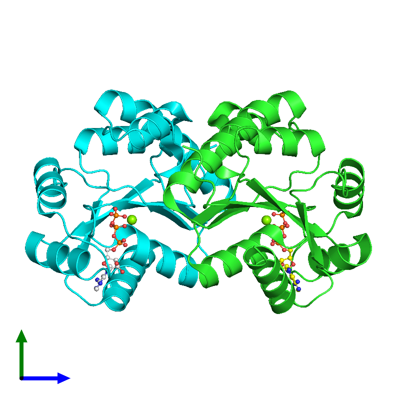 <div class='caption-body'><ul class ='image_legend_ul'>The deposited structure of PDB entry 1ko5 coloured by chain and viewed from the side. The entry contains: <li class ='image_legend_li'>2 copies of Thermoresistant gluconokinase</li><li class ='image_legend_li'>2 non-polymeric entities<ul class ='image_legend_ul'><li class ='image_legend_li'>2 copies of MAGNESIUM ION</li><li class ='image_legend_li'>2 copies of ADENOSINE-5'-TRIPHOSPHATE</li></ul></li></div>