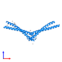 PDB 1l8d contains 2 copies of DNA double-strand break repair Rad50 ATPase in assembly 1. This protein is highlighted and viewed from the front.