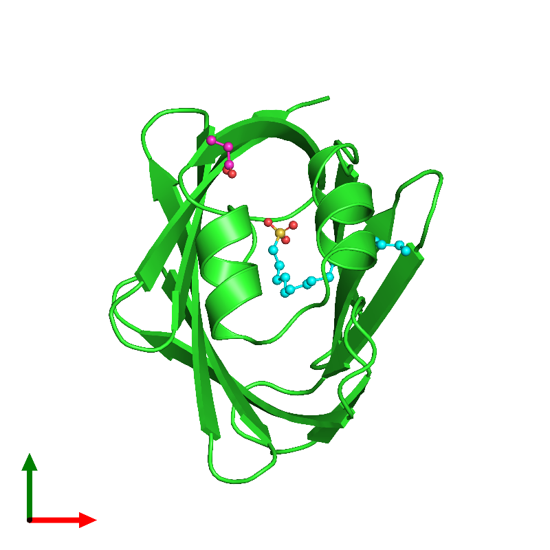 <div class='caption-body'><ul class ='image_legend_ul'>The deposited structure of PDB entry 1lic coloured by chain and viewed from the top. The entry contains: <li class ='image_legend_li'>1 copy of ADIPOCYTE LIPID-BINDING PROTEIN</li><li class ='image_legend_li'>2 non-polymeric entities<ul class ='image_legend_ul'><li class ='image_legend_li'>1 copy of 1-HEXADECANOSULFONIC ACID</li><li class ='image_legend_li'>1 copy of PROPANOIC ACID</li></ul></li></div>