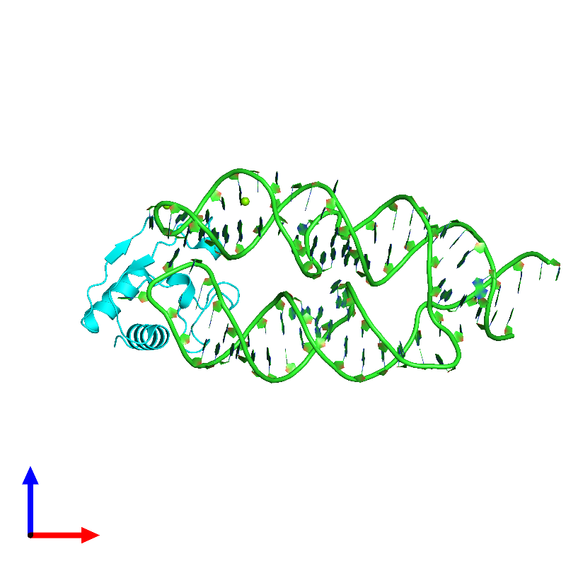 <div class='caption-body'><ul class ='image_legend_ul'>The deposited structure of PDB entry 1lng coloured by chain and viewed from the front. The entry contains: <li class ='image_legend_li'>1 copy of 7S.S SRP RNA</li><li class ='image_legend_li'>1 copy of Signal recognition particle 19 kDa protein</li><li class ='image_legend_li'>There is 1 non-polymeric molecule<ul class ='image_legend_ul'><li class ='image_legend_li'>2 copies of MAGNESIUM ION</li></ul></li></div>
