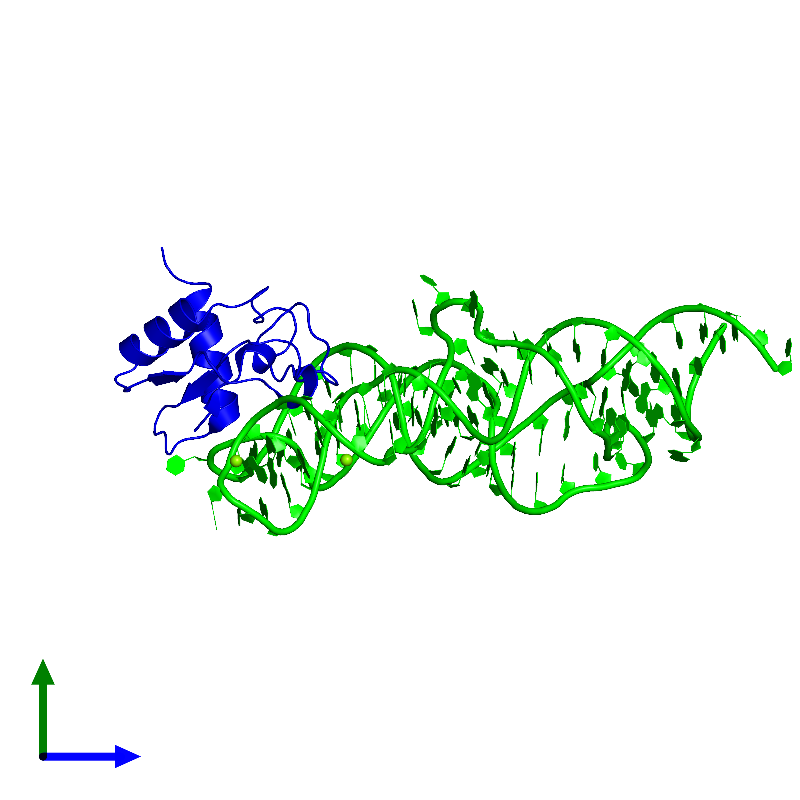 <div class='caption-body'><ul class ='image_legend_ul'>The deposited structure of PDB entry 1lng coloured by chemically distinct molecules and viewed from the side. The entry contains: <li class ='image_legend_li'>1 copy of 7S.S SRP RNA</li><li class ='image_legend_li'>1 copy of Signal recognition particle 19 kDa protein</li><li class ='image_legend_li'>There is 1 non-polymeric molecule<ul class ='image_legend_ul'><li class ='image_legend_li'>2 copies of MAGNESIUM ION</li></ul></li></div>