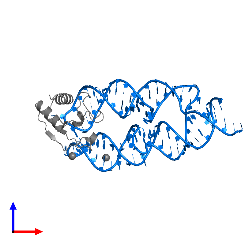 <div class='caption-body'>PDB entry 1lng contains 1 copy of 7S.S SRP RNA in assembly 1. This RNA molecule is highlighted and viewed from the front.</div>