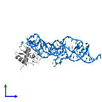 PDB 1lng contains 1 copy of 7S.S SRP RNA in assembly 1. This RNA molecule is highlighted and viewed from the side.