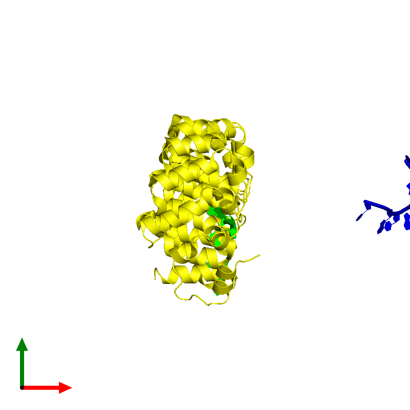 <div class='caption-body'><ul class ='image_legend_ul'> Dimeric assembly 1 of PDB entry 1m8x coloured by chemically distinct molecules and viewed from the top. This assembly contains:<li class ='image_legend_li'>One copy of 5'-R(P*UP*UP*GP*UP*AP*UP*AP*U)-3'</li><li class ='image_legend_li'>One copy of Pumilio 1</li></ul></div>