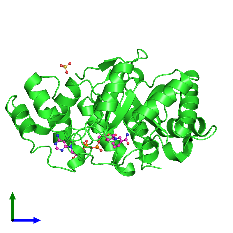 <div class='caption-body'><ul class ='image_legend_ul'>The deposited structure of PDB entry 1m9h coloured by chain and viewed from the side. The entry contains: <li class ='image_legend_li'>1 copy of 2,5-diketo-D-gluconic acid reductase A</li><li class ='image_legend_li'>2 non-polymeric entities<ul class ='image_legend_ul'><li class ='image_legend_li'>1 copy of SULFATE ION</li><li class ='image_legend_li'>1 copy of NICOTINAMIDE-ADENINE-DINUCLEOTIDE</li></ul></li></div>