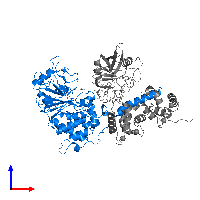 PDB 1mf8 contains 1 copy of Serine/threonine-protein phosphatase 2B catalytic subunit alpha isoform in assembly 1. This protein is highlighted and viewed from the front.