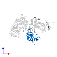 PDB 1mf8 contains 1 copy of Peptidyl-prolyl cis-trans isomerase A in assembly 1. This protein is highlighted and viewed from the front.