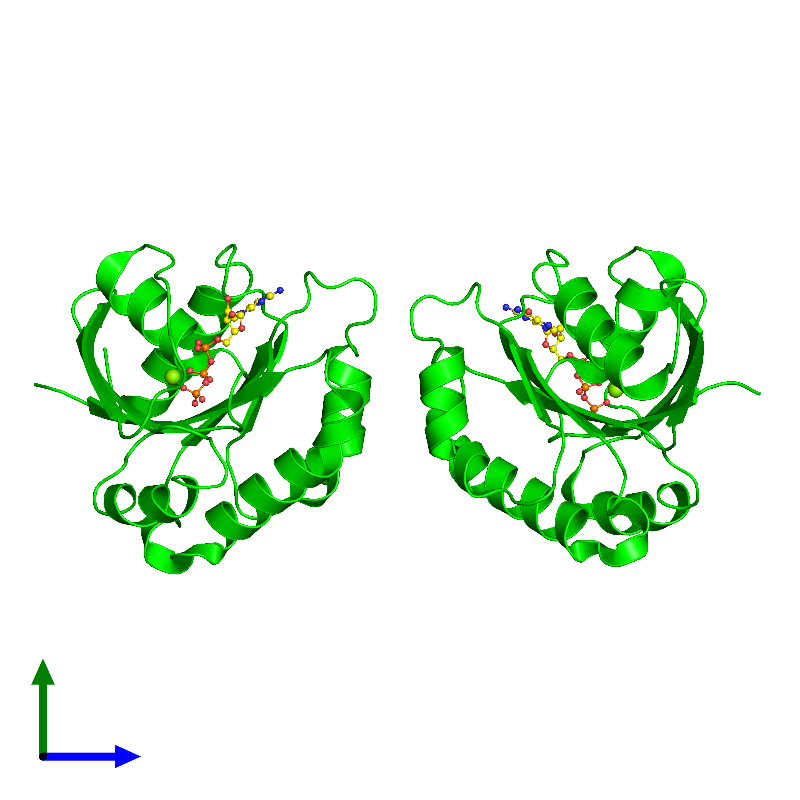<div class='caption-body'><ul class ='image_legend_ul'>The deposited structure of PDB entry 1o3y coloured by chemically distinct molecules and viewed from the side. The entry contains: <li class ='image_legend_li'>2 copies of ADP-ribosylation factor 1</li><li class ='image_legend_li'>2 non-polymeric entities<ul class ='image_legend_ul'><li class ='image_legend_li'>2 copies of MAGNESIUM ION</li><li class ='image_legend_li'>2 copies of GUANOSINE-5'-TRIPHOSPHATE</li></ul></li></div>