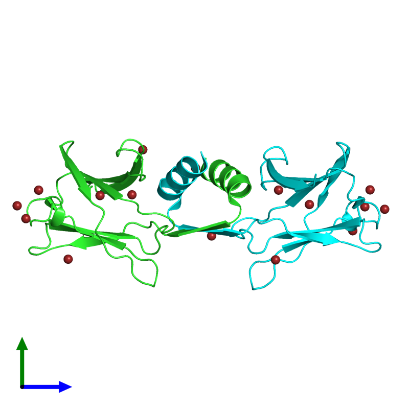 <div class='caption-body'><ul class ='image_legend_ul'> Dimeric assembly 1 of PDB entry 1osy coloured by chain and viewed from the side. This assembly contains:<li class ='image_legend_li'>2 copies of IMMUNOMODULATORY PROTEIN FIP-FVE</li><li class ='image_legend_li'>16 copies of BROMIDE ION</li></ul></div>